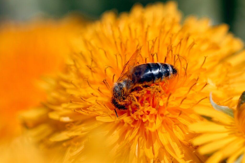 Bienen - Die Honigmacher