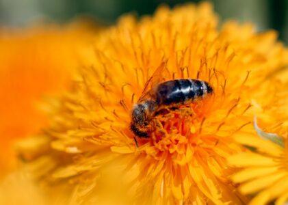 Honig - goldener Saft, der Wunder schafft
