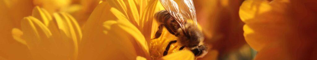 Bienenprodukte als Heilmittel